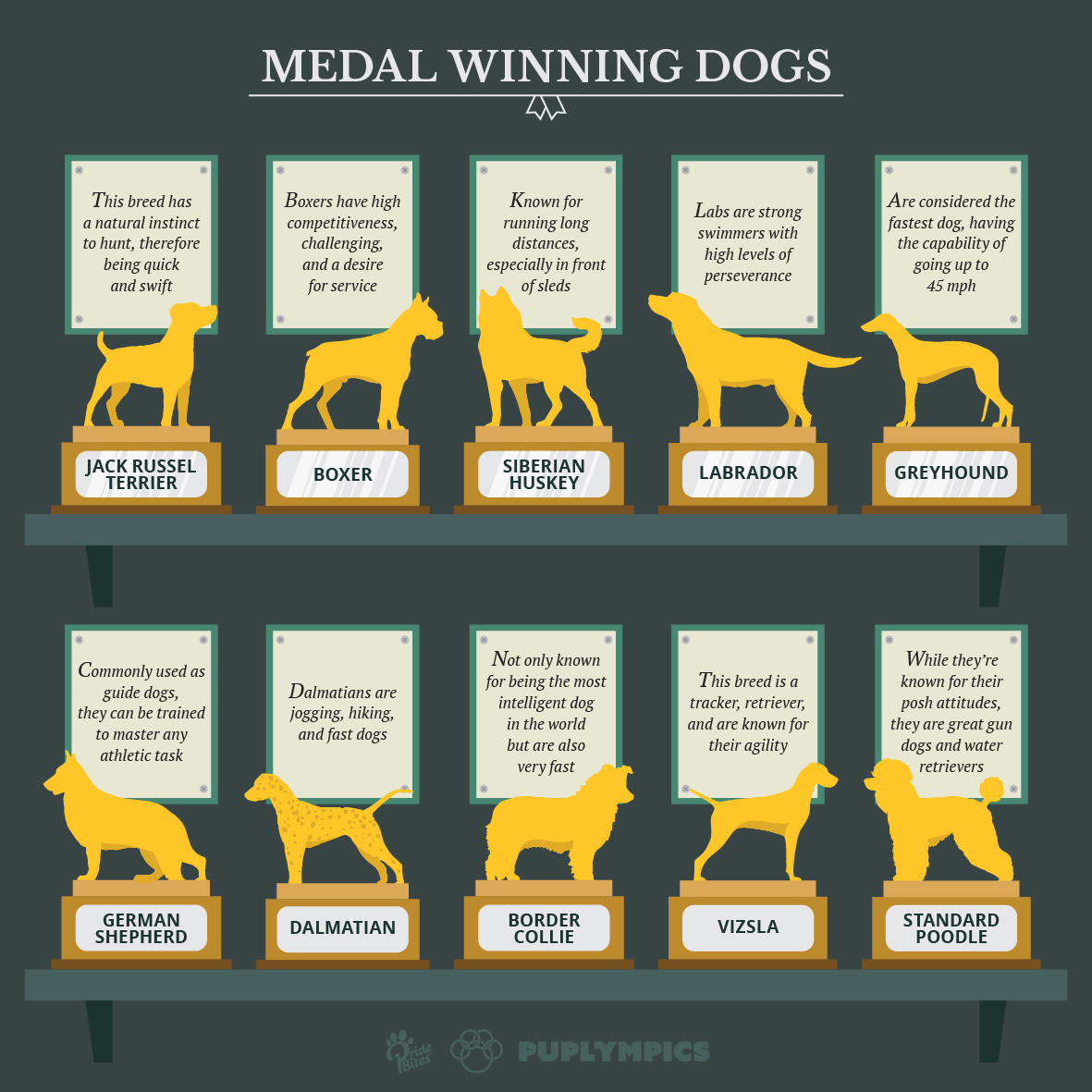 Medal_Dogs-01 (1)