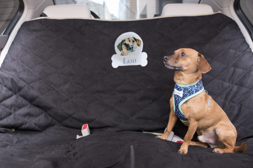 personalized dog car seat cover